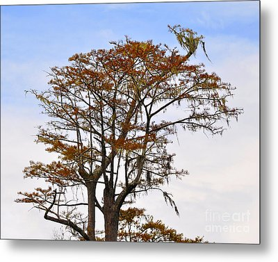 Colorful Cypress Metal Print by Al Powell Photography USA