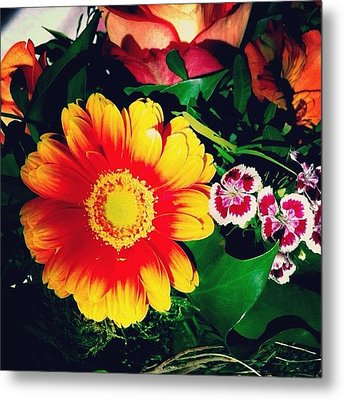 Colorful Flowers Metal Print by Matthias Hauser