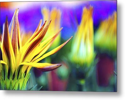 Colorful Flowers Metal Print by Sumit Mehndiratta