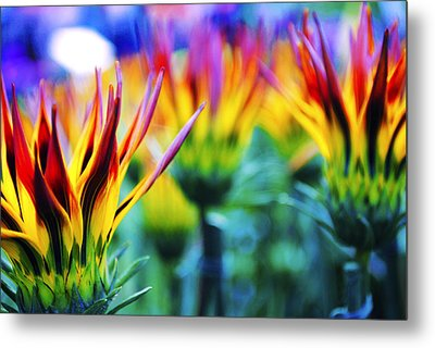 Colorful Flowers Together Metal Print by Sumit Mehndiratta