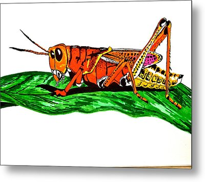 Colorful Grasshopper Metal Print by Erika Butterfly