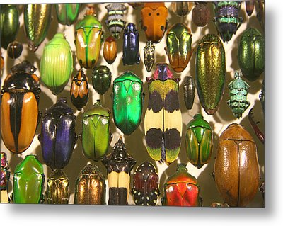 Metal Print featuring the photograph Colorful Insects by Brooke T Ryan
