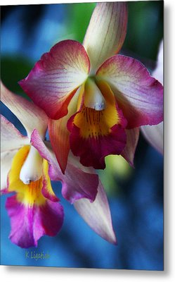 Colorful Orchids Metal Print by Kerri Ligatich