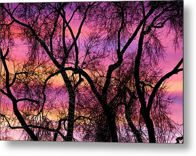 Colorful Silhouetted Trees 21 Metal Print by James BO  Insogna