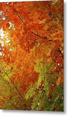 Colors Of Autumn Metal Print by Sylvia Hart
