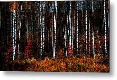 Colors Of Fall Metal Print by Jenny Rainbow