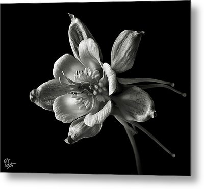 Metal Print featuring the photograph Columbine In Black And White by Endre Balogh