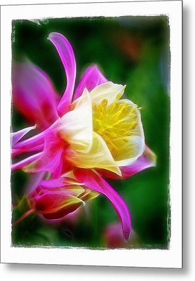 Metal Print featuring the photograph Columbine by Judi Bagwell