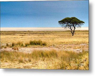 Metal Print featuring the photograph Coming Home by Juergen Klust
