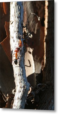 Communication Is The Ant Sir Metal Print by Sean Green