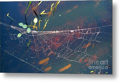 Metal Print featuring the photograph Complexity Of The Web by Nina Prommer
