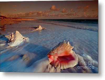 Conch Shell On Beach Metal Print by Novastock and Photo Researchers