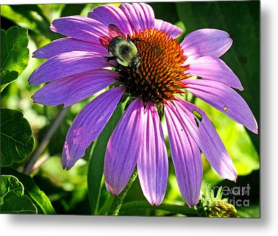 Metal Print featuring the photograph Cone Bee by Nava Thompson