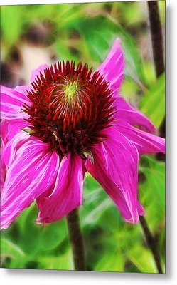 Metal Print featuring the photograph Coneflower by Judi Bagwell