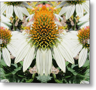 Coneflowers Metal Print by Michele Caporaso