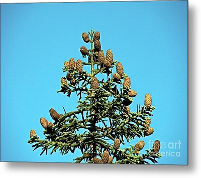 Metal Print featuring the photograph Cones by Nick Kloepping
