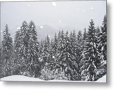 Coniferous Forest In Winter, Alps Metal Print by Konrad Wothe