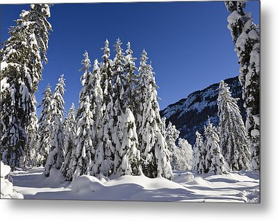 Coniferous Forest In Winter Metal Print by Konrad Wothe
