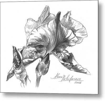 Conte Pencil Sketch Of Iris Metal Print