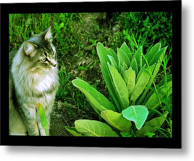 Metal Print featuring the photograph Contemplating The Nature Of Mullein by Susanne Still