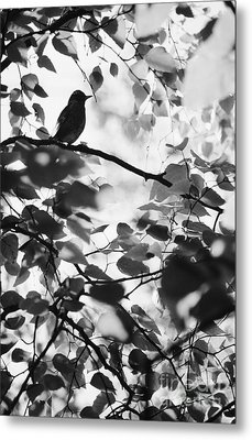 Contemplative Metal Print by Ronnie Glover