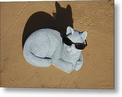 Metal Print featuring the photograph Cool Cat by Aimee L Maher Photography and Art Visit ALMGallerydotcom