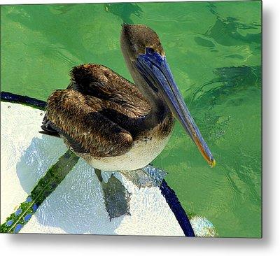 Cool Footed Pelican Metal Print by Karen Wiles