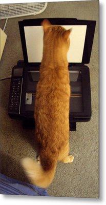 Copy Cat Metal Print by Cynthia Harvey