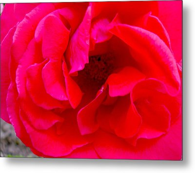 Coral Beauty Metal Print by Tamara Bettencourt