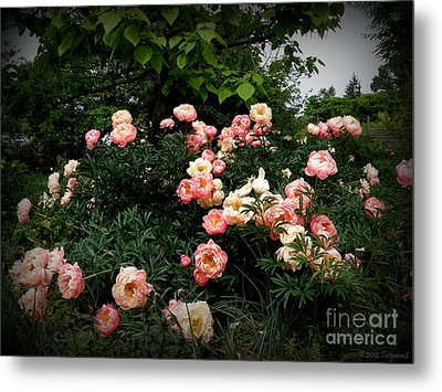 Metal Print featuring the photograph Coral Peony by Tanya  Searcy