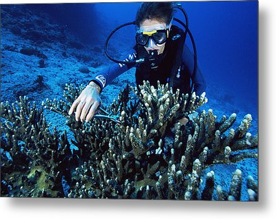 Coral Research Metal Print by Alexis Rosenfeld