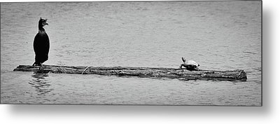 Cormorant And Turtle Metal Print by Kevin Munro