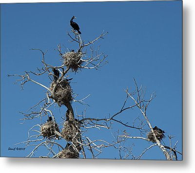 Metal Print featuring the photograph Cormorant Condos by Stephen  Johnson