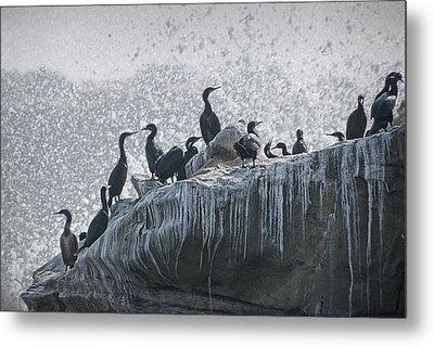 Cormorant Seabirds At Lajolla Metal Print by Randall Nyhof