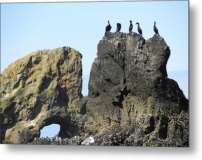 Cormorants At Indian Point Metal Print