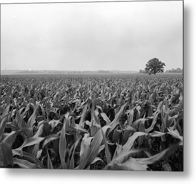 Corn Flakes On The Stem Metal Print by Jan W Faul