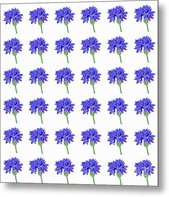 Cornflowers Metal Print by Barbara Moignard