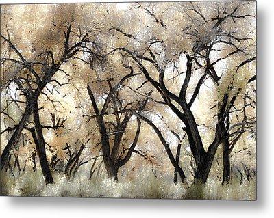 Cottonwood Trees Metal Print by Denice Breaux
