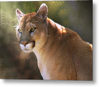 Metal Print featuring the digital art Cougar by Mary Almond