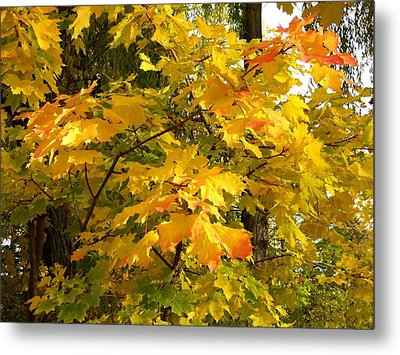 Country Color 10 Metal Print by Will Borden