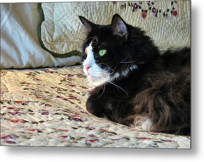 Country Kitty Metal Print by Art Dingo