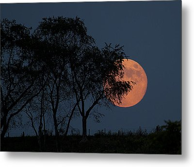 Country Moon  Metal Print by Betsy Knapp