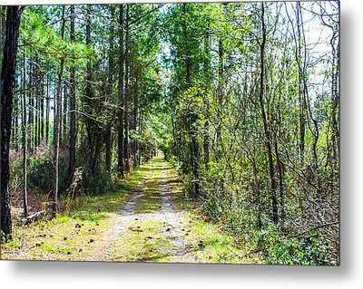 Metal Print featuring the photograph Country Path by Shannon Harrington