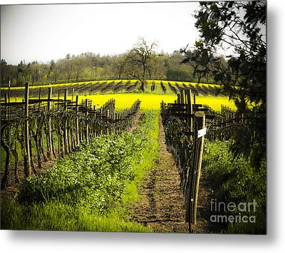 Metal Print featuring the photograph Country Roads by Leslie Hunziker