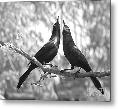 Metal Print featuring the photograph Courtship by Jan Piller