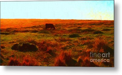 Cow Grazing In The Hills Metal Print by Wingsdomain Art and Photography