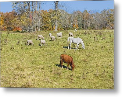 Cow Horse Sheep Grazing On Grass Farm Field Maine Photograph Metal Print by Keith Webber Jr