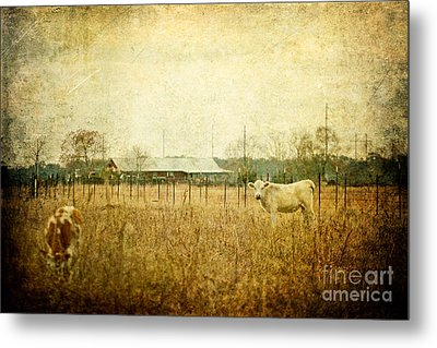 Cow Pasture Metal Print by Joan McCool