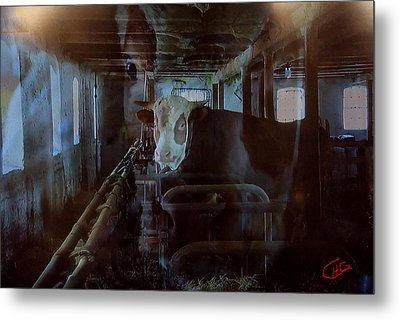 Cow Shelter Indoor Metal Print by Colette V Hera  Guggenheim