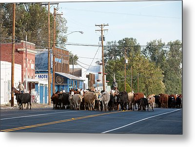 Metal Print featuring the photograph Cow Town by Gary Rose